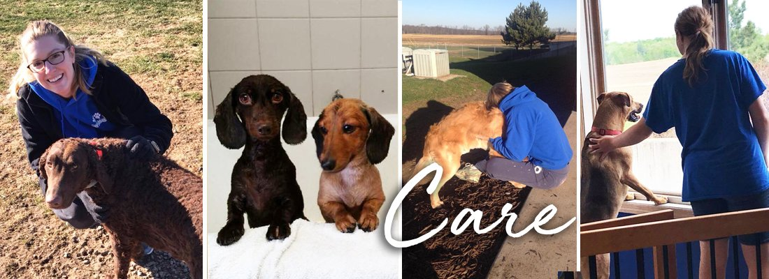 Care Northern Paws